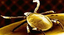 Šumski krpelji i bolesti koje prenose